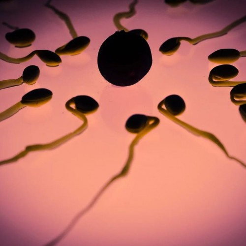 Getting pregnant with a low sperm count - it is possible!
